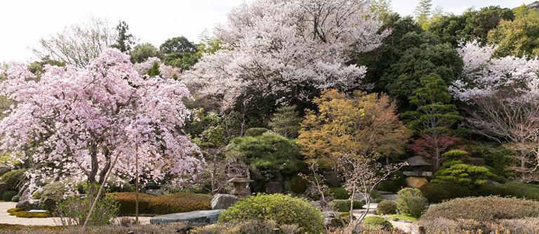 大内四季庭の写真